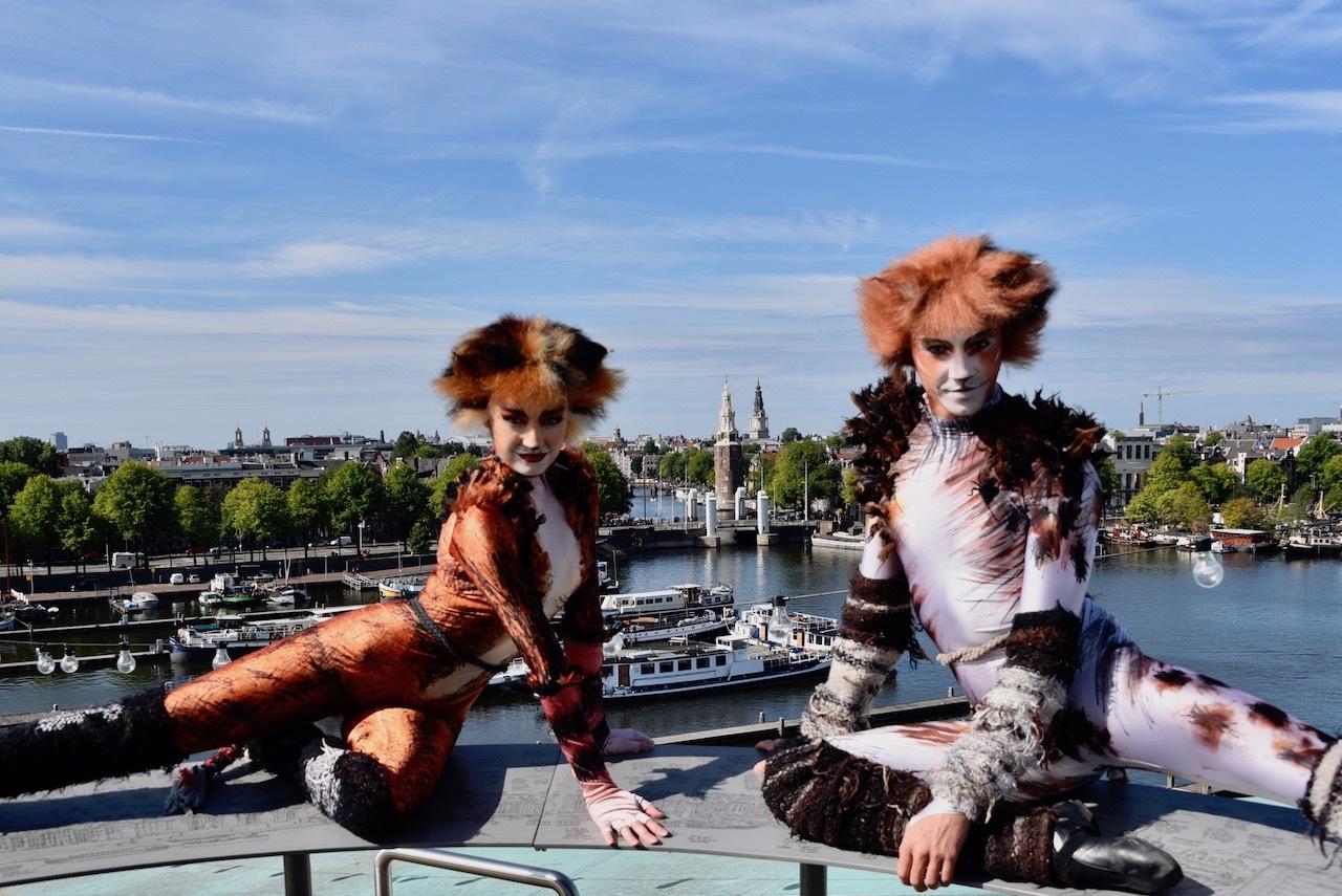 Eerste Cats gesignaleerd in Amsterdam
