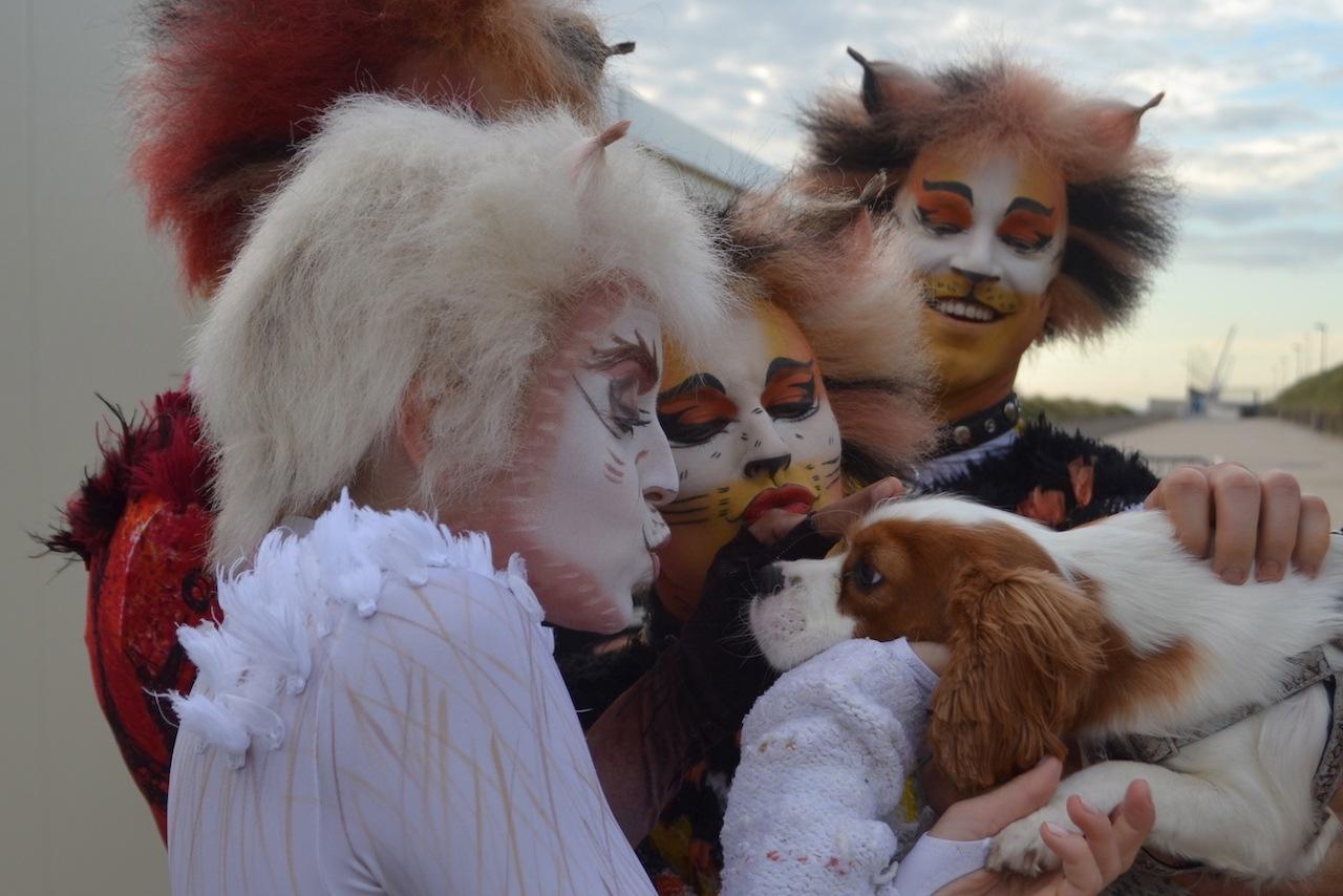 Speciale dierendagactie voor musical Cats